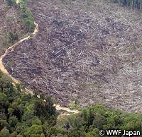 sumatra-forest.jpg