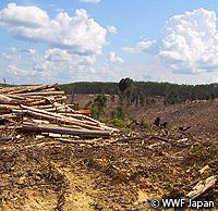 sumatra-forest2.jpg
