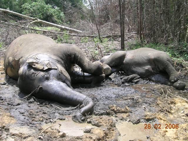 スマトラ島の熱帯林の減少 |WWFジャパン
