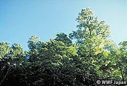 持続可能な森林の利用