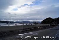 wwf_fukkou02.jpg