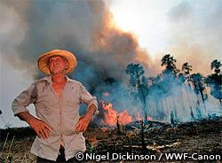 農地への転換のために破壊される森林