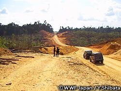 森林が減少するインドネシア