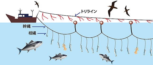 延縄漁業 ■延縄漁業の図 延縄漁と海鳥の混獲 -まず、「延縄(はえなわ)」という漁法について教え