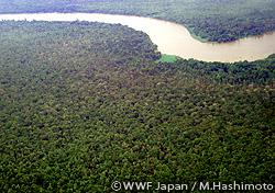 「REDD+」を視野に、ボルネオで森の森林調査を実施