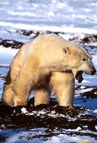 (C)Francois PIERREL/WWF