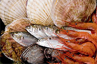 持続可能な漁業の推進