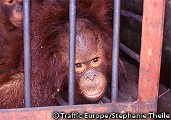 野生生物の違法取引対策