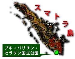 20110101g.jpg
