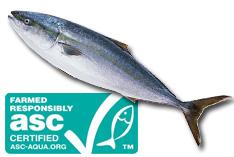持続可能なブリ・スギ養殖の実現に向けて ASC認証の監査はじまる