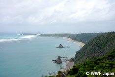 沖縄県知事が辺野古の海の埋立て申請を承認