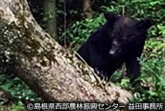 クマが出た!その時、住民の皆さんは...? 島根県匹見町の報告より
