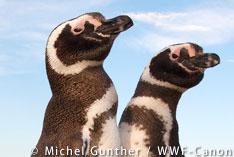 「持続可能なシーフード」でペンギンの海を守れ