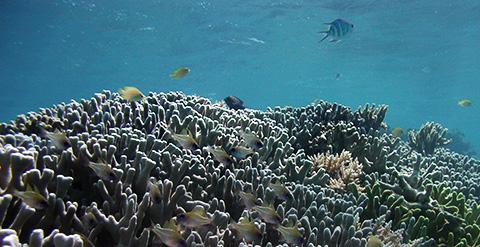 生物多様性条約会議(CBD・COP12)に関するWWFの声明
