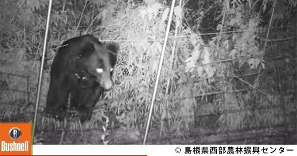 進行中!クマとの共存めざす島根県のモデル柿園