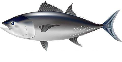 ICCAT会合閉幕 地中海クロマグロの漁獲量増枠に懸念
