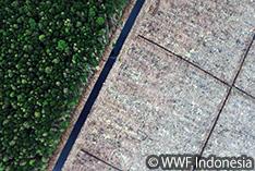 熱帯林保全に向けたAPRIL社の誓約 またも実現されず