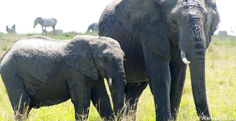シンポジウム「希少な生物保全のために-野生生物輸入国、日本の責任」報告