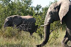 世界の違法な野生生物取引の撲滅を!ボツワナ・カサネ会議が終了