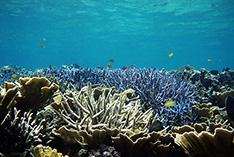沖縄の海を守れ!「やんばる」での赤土防止に向けた協力