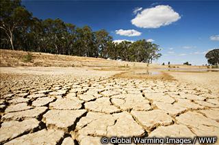 化 影響 温暖 地球 の