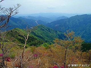 四国山地でクマの分布調査「はしっこプロジェクト」実施中!