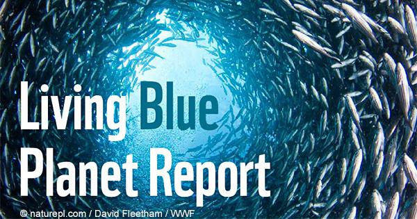 深刻化する海の危機『Living Planet Report<海洋編>』発表