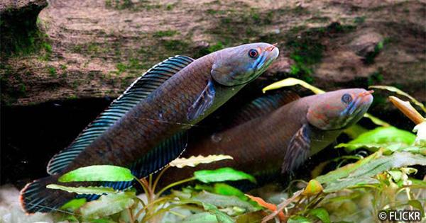 アジアのワンダーランド!ヒマラヤ東部で200種の新種を確認