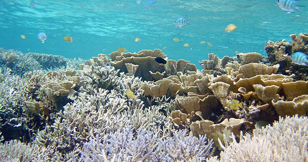 白保サンゴ礁地区保全利用協定を沖縄県知事が認定