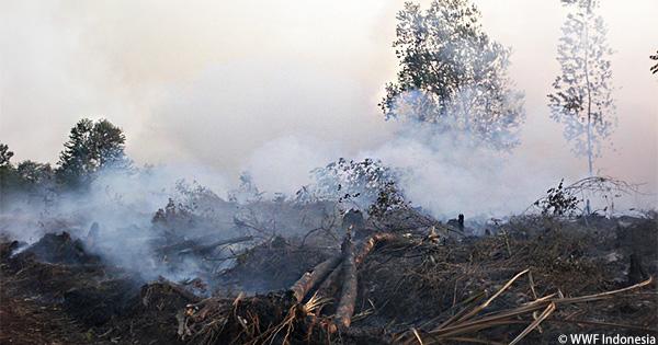 プランテーション開発による影響:周辺国をも襲うインドネシアからの煙害