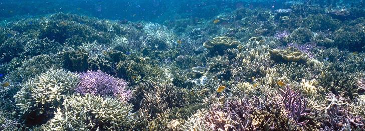 南西諸島エコリージョン
