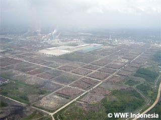 新工場稼働により原料不足?APP社への懸念高まる