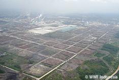 WWF、エイプリル社(APRIL)の「ステークホルダー諮問委員会」への参加停止を発表