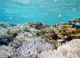 報告書:地域での実践活動から学ぶ「地域主体の生物多様性保全」