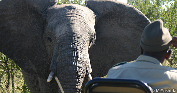 ワシントン条約会議(COP17)での象牙をめぐる決議
