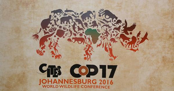 ワシントン条約第17回締約国会議(CITES COP17)報告:成果と求められる努力