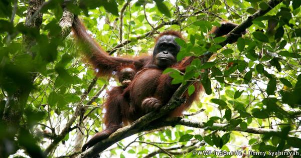 2020年を見据えたセミナー「木材調達とボルネオの森林」開催報告