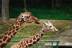 【シリーズ】改正!種の保存法(2)問い直される動物園・水族館をめぐる新制度