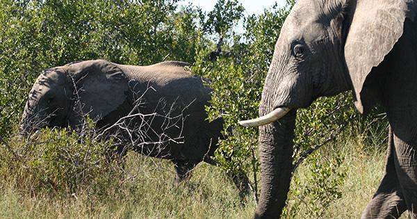 【シリーズ】改正!種の保存法(3)象牙、そして海外の野生生物をめぐる課題