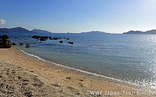 島嶼の生態系を守るために~外来種問題を考えるシンポジウム報告