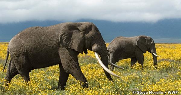 楽天がオンライン店舗での象牙製品販売を停止