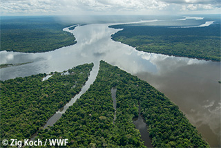 アマゾンで381種の新種発見を報告