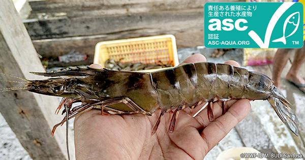 インドネシア初!ブラックタイガー(エビ)の「ASC認証」が誕生