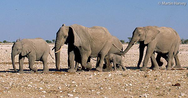 【シリーズ:象牙とアフリカゾウ】象牙をめぐる歴史イメージ
