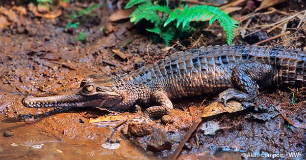 脅かされる爬虫類の今 上野動物園とセミナーを開催