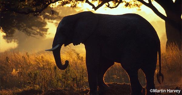 「適正な象牙取引の推進に関する官民協議会」が報告書を発表