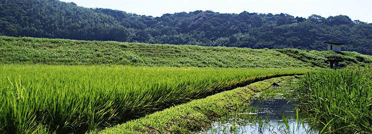 水田・水路の生物多様性と農業の共生プロジェクト