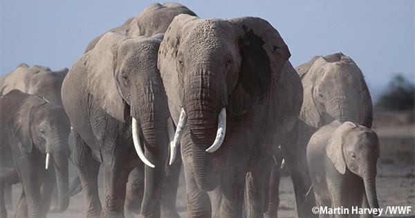 香港政府が象牙取引終了を決意 実現に向けた法案が可決
