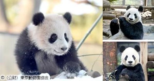 ジャイアントパンダの飼育繁殖と保全の最前線
