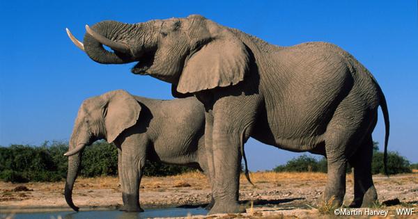 イギリス��湾�象牙�引�止を決定イメージ